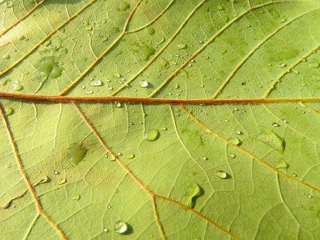 Leaf, Texture, Green, Nature, Vegetable