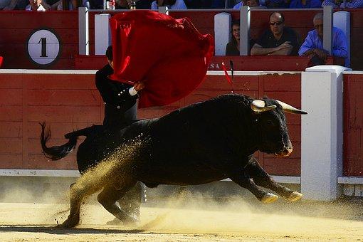 Bulls, Torero, Spain, Albacete, Matador, Plaza Toros