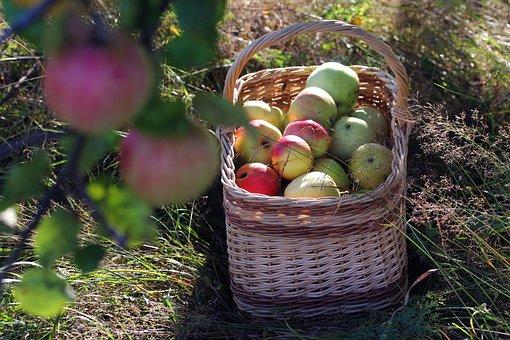 Apple, Basket, Autumn, Garden, Fruit, Fruits