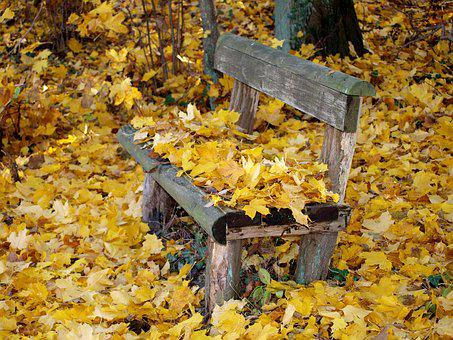 Park Bench, Autumn, Fall Foliage, Bank, Park, Leaves