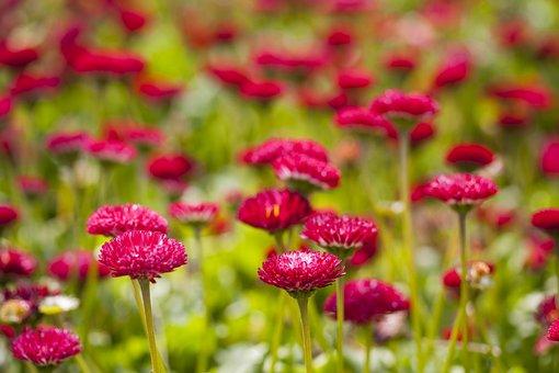 Flower, Purple, Red, Green, Vivid Color, Flowers, Macro