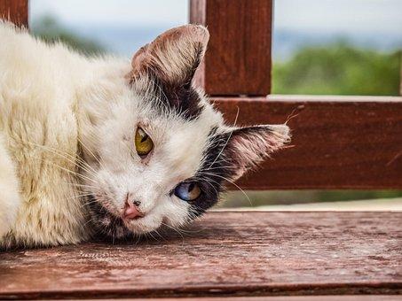 Cat, Stray, Looking, Eyes, Strange, Animal, Homeless