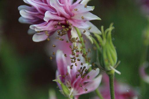 Spin, Macro, Nature, Krabbeltier, Close, Leaf, Color