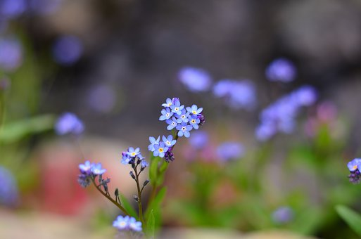 Flower, Nature, Macro, Green, Turkey, Close, Beautiful