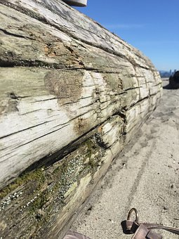 Driftwood, Log, Beach, Sand, Wood, Nature, Landscape