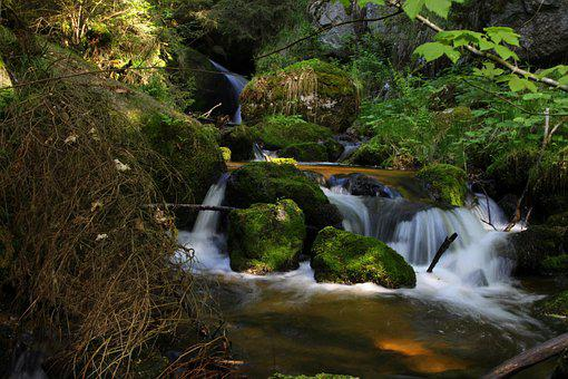 Rock, Moss, Bach, Water, Nature, Stone, Fouling, Forest