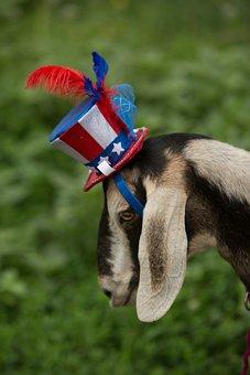 Patriotic, Goat, Blue, Red, Star, White, Patriotism