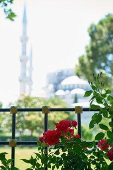 Cami, Landscape, Beautiful, Flower, Red, Rose, Garden
