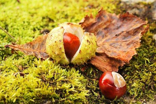 Chestnut, Chestnut Tree, Chestnut Leaves, Autumn, Fruit