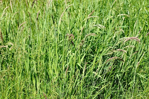 Pasture, Grass, Green, Early Summer, Juicy, Coupling