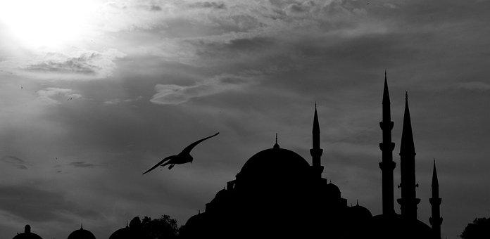 Cami, Minaret, Bird, Landscape, Seagull, Architecture