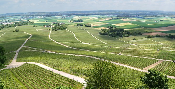 Panorama, Vineyards, Vines, View, Outlook, Spring