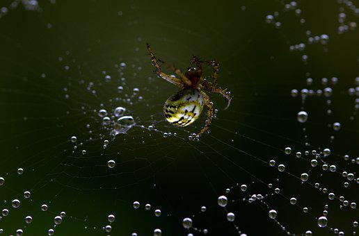 Spider, Spider Web, Hooked, Arachnid, Place, Drops, Dew