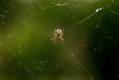 Spider, Spider Web, Hooked, Arachnid, Place