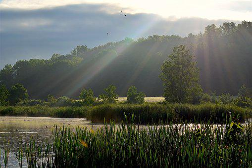 Sunlight, Wetlands, Sun Rays, Nature, Landscape, Water