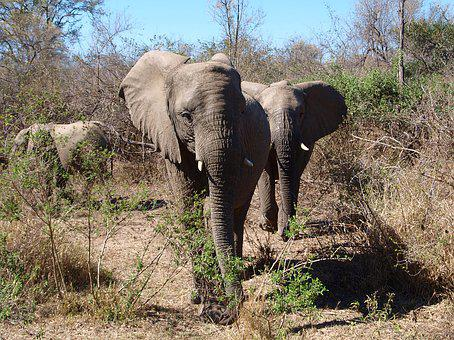 Elephant, Africa, Wild Animal, Safari, National Park