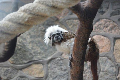 Monkey, äffchen, Zoo, Mammal