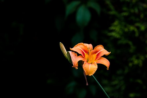 Lily, Blossom, Bloom, Orange, Nature, Blossomed