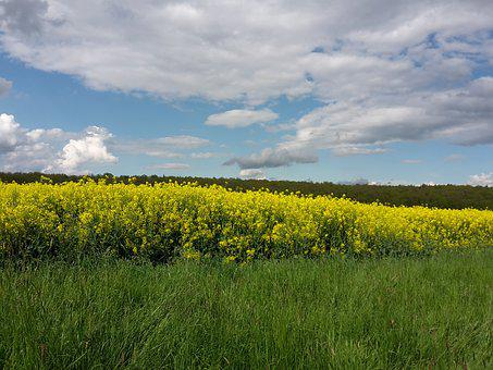 Nature, Field, Oilseed Rape, Away, The Merry Month Of