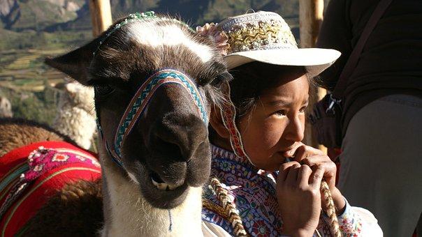 Child, Lama, Peru