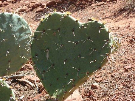 Cactus, Heart, Heart Cactus, Desert, Sedona, Arizona