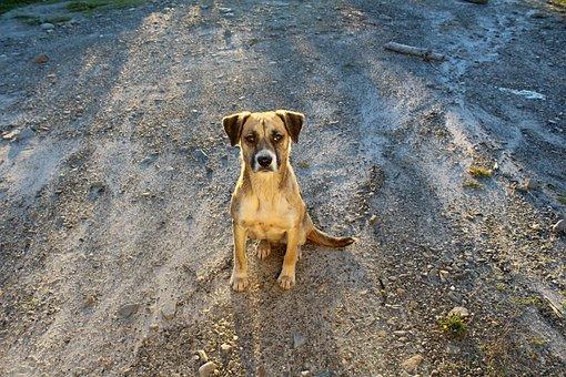 Adoption, Dog, Pet, Puppy, Animal, Cute, Shelter, Adopt