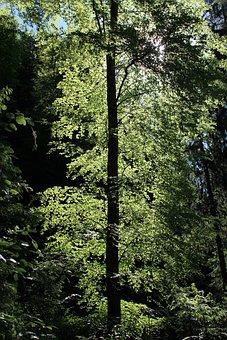 Tree, Leaves, Back Light, Green, Tribe, Log, Nature