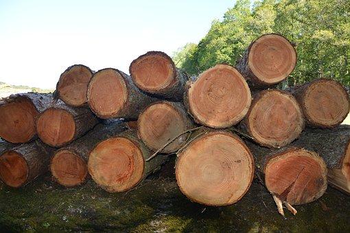 Wood, Trunks, Tree, Tree Trunk, Nature, Woodcutter, Log
