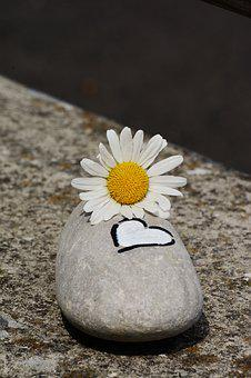 Stone, Marguerite, Heart, Symbol, Blossom, Bloom