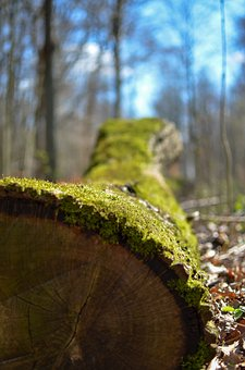 Tree, Forest, Moss, Nature, Strains, Bark
