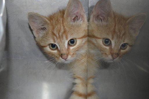 Animal Welfare, Cat, Kitten
