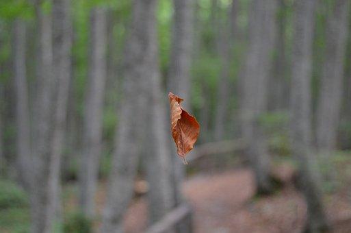 Leaf, Foliage, Dried Leaves, Dry Leaf, Trees