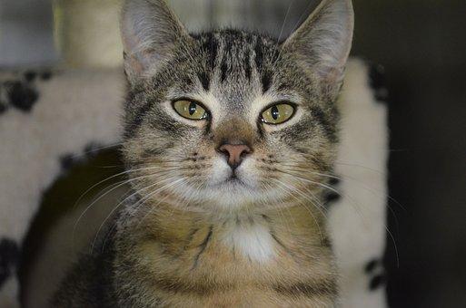 Animal Welfare, Cat, Kitten, Tiger Cat