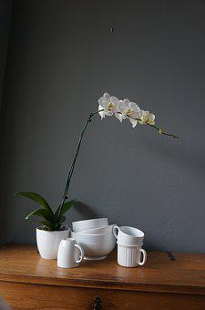Orchids, Cups, White