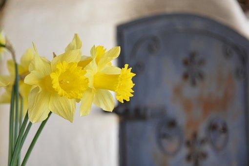 Daffodil, Yellow, Green, Furnace, Flower