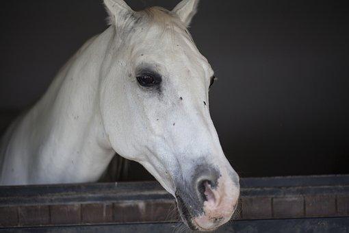 Horse, Head, Animal, Portrait, Beautiful, Eye