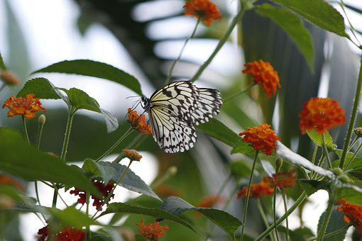 Butterfly, Nature, Spring, Green, Flower, Insect