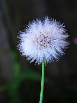 Plant, Flower, Garden, Nature, Spring, Floral, Summer