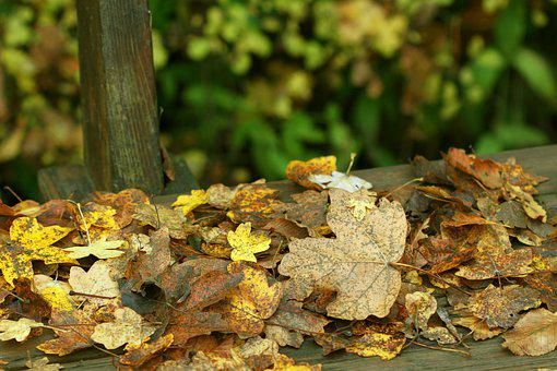 Autumn, Forest, Autumn Forest, Fall Leaves, Leaves