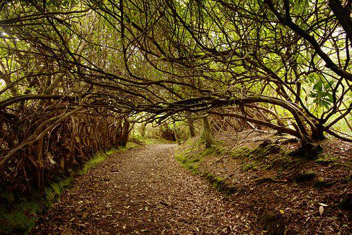 Forest, Woods, Woodland, Trail, Path, Archway, Trees