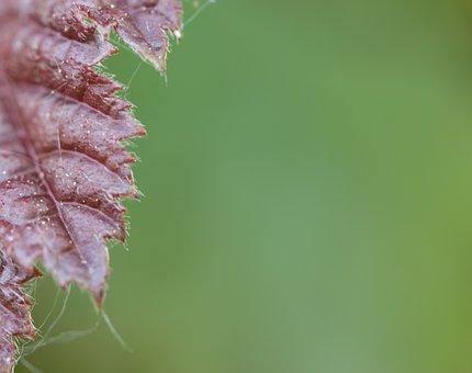 Foliage, Burgundy, Green, Background, Autumn, Red