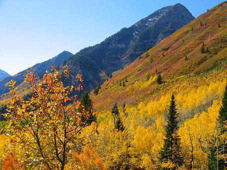 Trees, Forest, Autumn, Fall, Blue Sky, Nature, Aspen