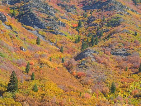Trees, Forest, Autumn, Fall, Nature, Aspen, Mountains