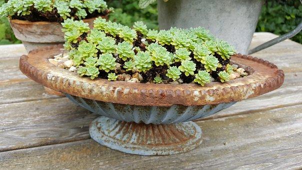 Succulent, Shell, Stone Garden, Plant, Nature, Garden