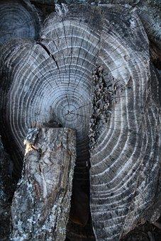 Wood, Trunk, Rings, Tree, Cut Trunk, Bark, Texture