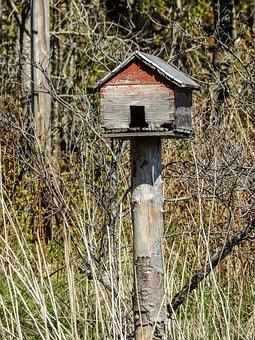 Feeder, House, Bird, Feed, Tree, Food, Wildlife, Season