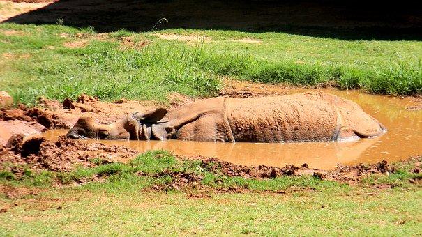 Rhino, Zoo, Animal, Wildlife, Wild, Rhinoceros, Nature
