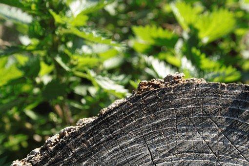 Trunk, Tree, Wood, Bark, Nature, Texture, Green
