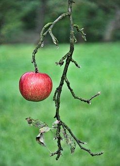 Apple, Fruit, Eating, Fiber, Nature, Sad, Health