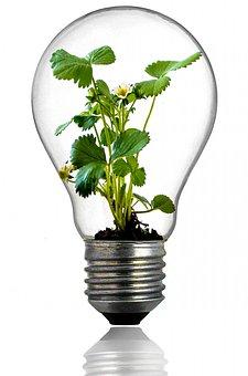 Bulb, Light Bulb, Growth, Plant, Light, Green, Leaf
